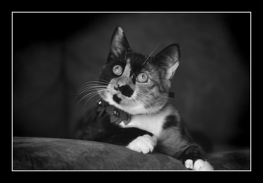 B&W Kitty