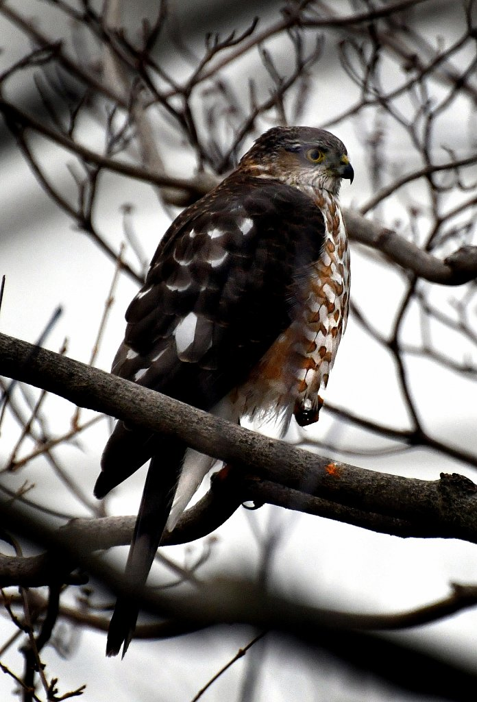 Project Wildlife of New Jersey