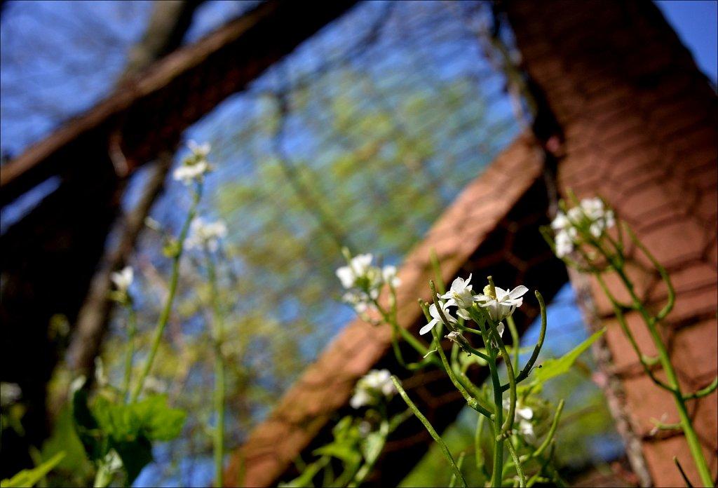 Springtime In The Yard