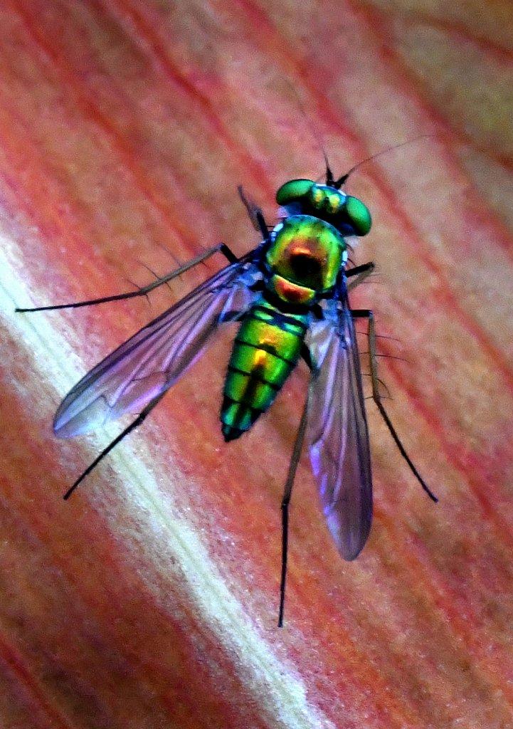 Super-Fly-1253.jpg