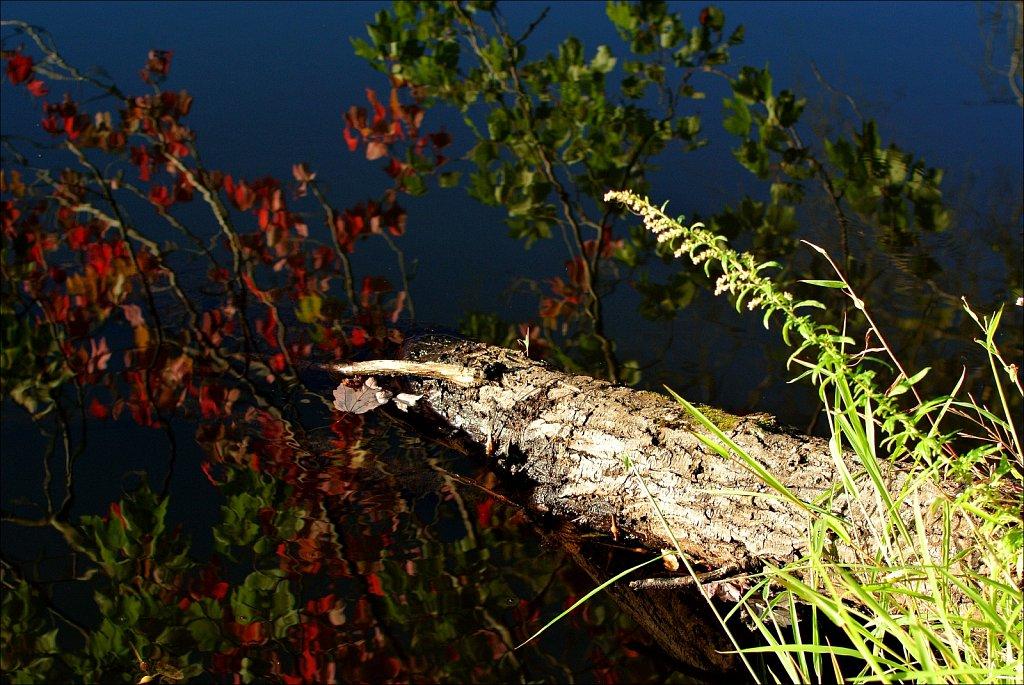 20200911 Twenty Photos at Maiers Pond