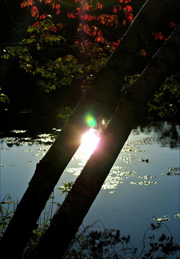 Maiers Pond