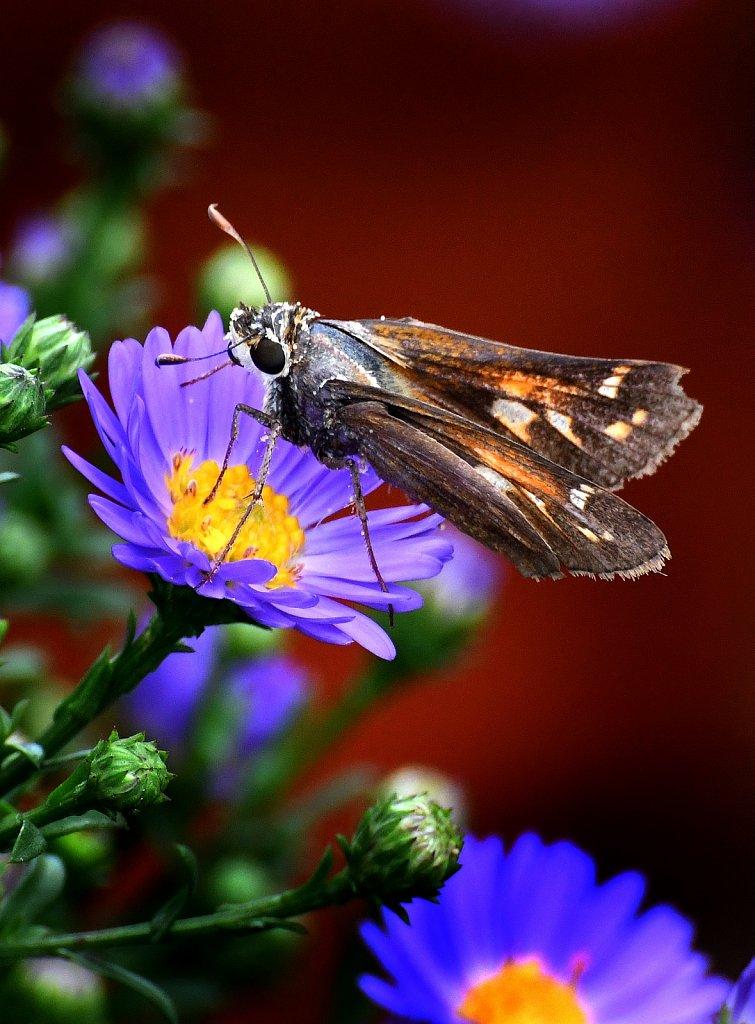 Moth-Flowers-2726-copy.jpg