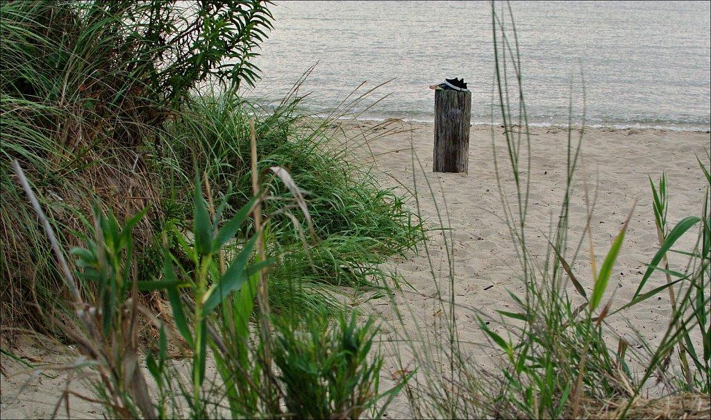Higbee Beach