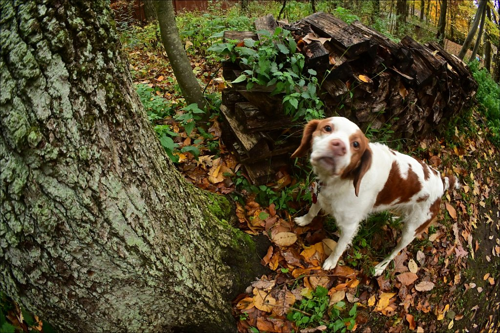 Copper at the Tree
